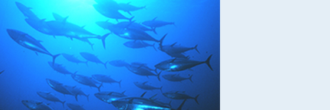 Bluefin Tuna Finally Catch a Break